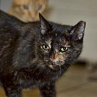 Adopt A Pet :: Teak - Shamokin, PA