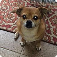 Adopt A Pet :: **ROCCO** - Rockaway, NJ