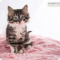 Adopt A Pet :: Malibu - Eagan, MN