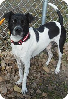 Hound (Unknown Type) Mix Dog for adoption in Gary, Indiana - Johnny