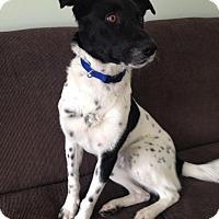 Adopt A Pet :: Stitch - Saskatoon, SK