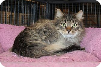 Domestic Longhair Cat for adoption in Hamilton, Ontario - Shera/Julie