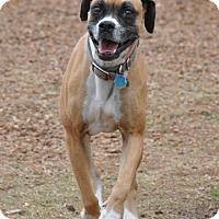 Adopt A Pet :: Buttons - Brentwood, TN