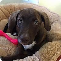 Adopt A Pet :: Emma - Marlton, NJ