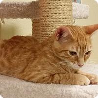 Adopt A Pet :: Mufasa - Phoenix, AZ