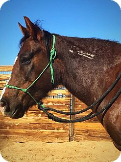 Mustang Mix for adoption in Lancaster, California - Maddie
