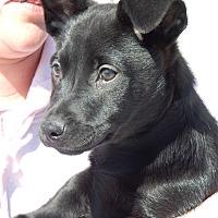 Adopt A Pet :: Peter - Long Beach, NY