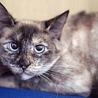 Adopt A Pet :: Marcie - Alameda, CA