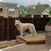 Adopt A Pet :: Alaska - Fort Worth, TX