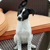 Adopt A Pet :: Ash - New Oxford, PA