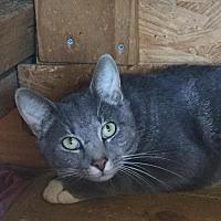 Adopt A Pet :: Jesse - Martinsburg, WV