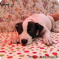 Adopt A Pet :: Danny - Toms River, NJ