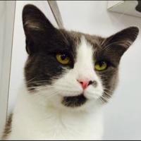 Adopt A Pet :: Selena - Greensboro, NC