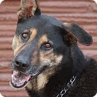Adopt A Pet :: Cheyenne von Chieming - Los Angeles, CA