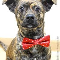 Adopt A Pet :: Owen - Dublin, CA