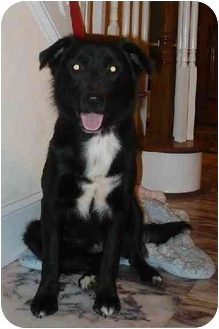 Border Collie Mix Dog for adoption in Chapel Hill, North Carolina - Greta