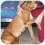 Photo 2 - Boxer Dog for adoption in Albany, Georgia - Punkin