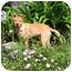 Photo 2 - Labrador Retriever Mix Puppy for adoption in Irvine, California - STAR