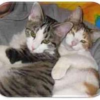 Adopt A Pet :: Paige - Solon, OH