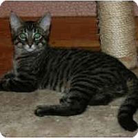 Adopt A Pet :: Rod - Montreal, QC