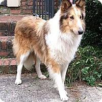 Adopt A Pet :: Tucker*VIDEO* - Columbia, SC