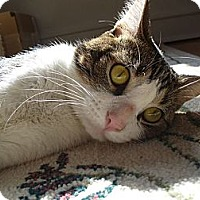 Adopt A Pet :: Mr. Mina - Chicago, IL