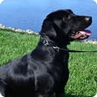 Adopt A Pet :: Barnaby - Lewisville, IN