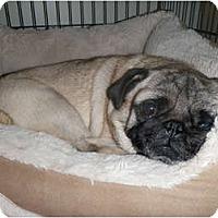 Adopt A Pet :: Jazzy - Windermere, FL