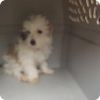 Adopt A Pet :: Marshall - Algonquin, IL