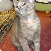 Adopt A Pet :: LUCINIA - Acme, PA