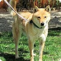 Adopt A Pet :: Nari - Los Angeles, CA