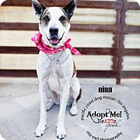 Adopt A Pet :: ADOPTION PENDING-Nina-VIDEO - Woodland Hills, CA