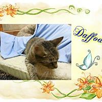 Adopt A Pet :: Daffodil - Buffalo, IN