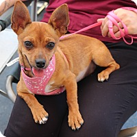 Adopt A Pet :: Abby - Yuba City, CA