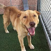 Adopt A Pet :: Marley - Beachwood, OH