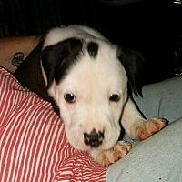 Adopt A Pet :: Trevor - Herndon, VA