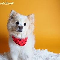 Adopt A Pet :: Frankie - Harrisburg, PA