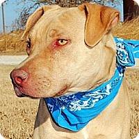 Adopt A Pet :: Matt - Gonzales, TX