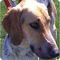 Adopt A Pet :: Paulie - Scottsdale, AZ