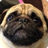 Adopt A Pet :: Fin - Canoga Park, CA