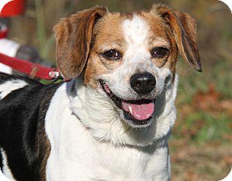 Beagle Mix Dog for adoption in Marietta, Ohio - Yukie