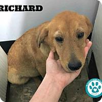 Adopt A Pet :: Richard - Kimberton, PA
