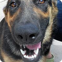 Adopt A Pet :: KayDee - Oakley, CA