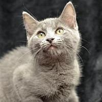 Adopt A Pet :: Tinker 170711 - Atlanta, GA