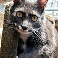 Adopt A Pet :: Aria - Vancouver, BC