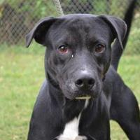 Adopt A Pet :: BARK RUFFALO - Thomasville, GA