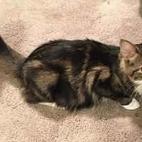 Adopt A Pet :: Louise - Covington, KY