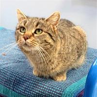 Adopt A Pet :: Pixie - Indiana, PA