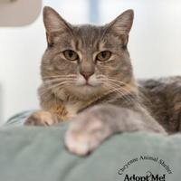 Adopt A Pet :: Cassia - Cheyenne, WY