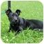 Photo 3 - Terrier (Unknown Type, Medium) Mix Puppy for adoption in Troy, Michigan - Maggie